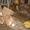 Тельферы б/у в ассортименте Болгария , Россия #500080