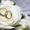 Видеосъемка свадьбы в Черкассах и области. #996007