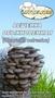 Семена грибов, споры грибов, мицелий вешенки, шампиньона Недорого! - Изображение #2, Объявление #736222