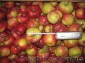 Продам яблоки от производителя