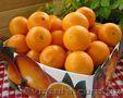 Апельсины грейпфруты Мандарины