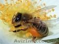 Продам бджолосім`ї