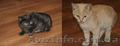 Котята в хорошие руки | Одам котят в хорошие руки | Котенок бесплатно